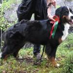 Alpigiano Amato Aida syksyllä 2005